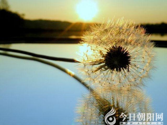 """【今日朝阳网】面对杨琳话生死(姚玉民)"""""""