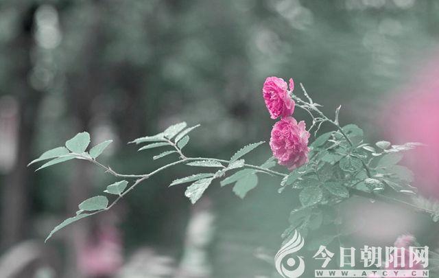 """【今日朝阳网】雨声(王一然)"""""""