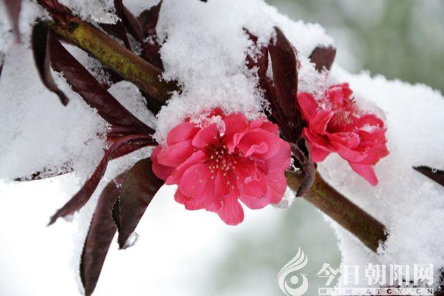 雪,是冬天的灵气,也是春天的使者,在这初春时节,她随着春天的脚步轻盈