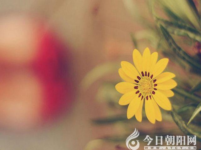 """【今日朝阳网】村头那座孤零零的坟(张健)"""""""