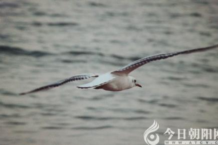 【今日朝阳网 摄影作品欣赏】海滩踪迹(李兴兆)