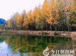 【摄影作品欣赏】浅冬,与秋深情对望(马丽)