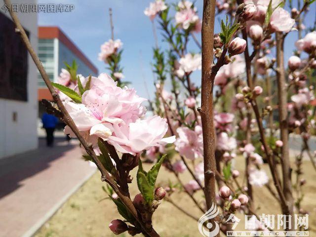 这所学校的景色太美了,您不想来看看吗?
