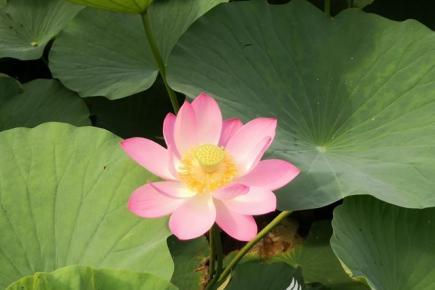 """立在湖中的""""小仙女"""""""