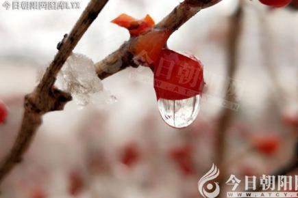 【今日朝阳网】雪落无声 如诗如画