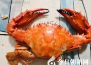 螃蟹为啥叫螃蟹(王中原)