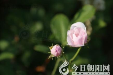 花语启智——白玉堂