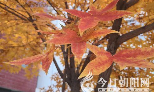 """【今日朝阳网】秋(陈健平)"""""""