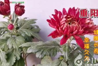 重阳节:祝天下老人健康长寿!