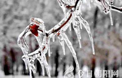 一场冬雨,给了我们一个银装素裹的世界(史庆友)