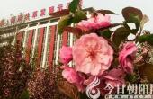 绚丽海棠靓校园