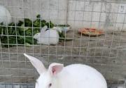 伟大的兔妈妈(何艳)